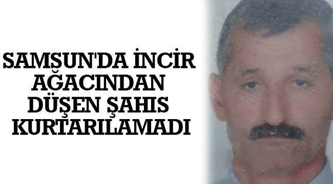 SAMSUN HABER - Samsun'da incir ağacından düşen şahıs kurtarılamadı
