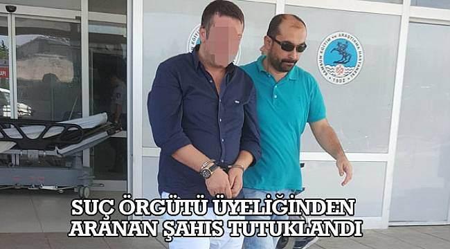 SAMSUN HABER - Suç örgütü üyeliğinden aranan şahıs tutuklandı