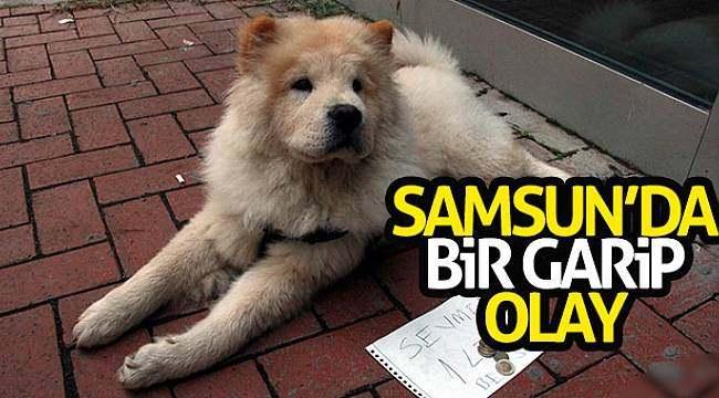 Samsun'da bir garip olay