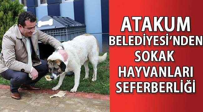 SAMSUN HABER - Atakum Belediye'si sokak hayvanlarına sahip çıkıyor