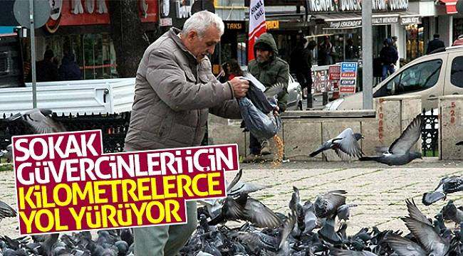 Sokak güvercinleri için kilometrelerce yol yürüyor