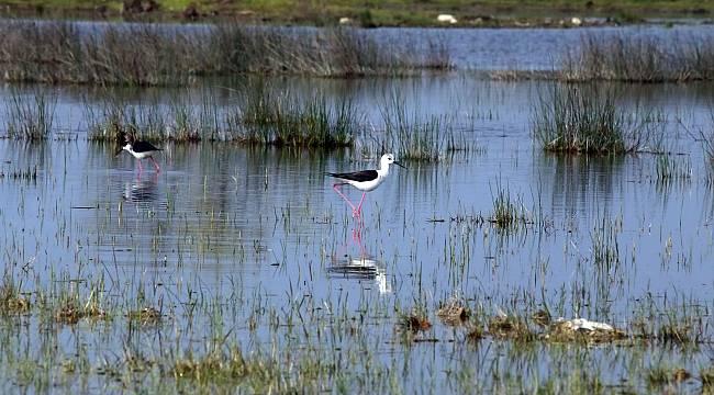 Kızılırmak Deltası'nda doğal yaşam