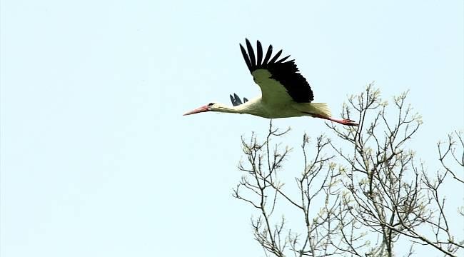 Kızılırmak Deltası'nda su kuşu sayısı düştü
