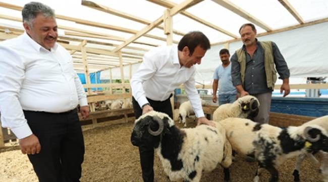 Genç, vatandaşları hayvan pazarına davet etti