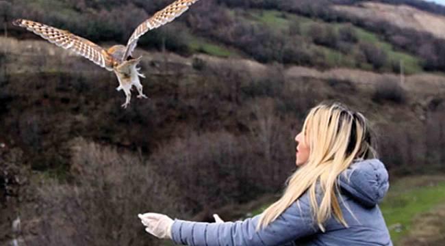 Yavru baykuşlar özgürlüklerine kavuştu