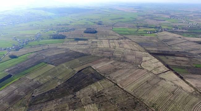 Deltada hasat sonrası çeltik tarlaları