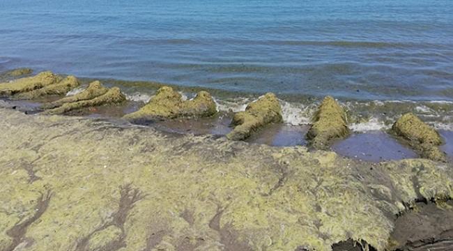 Özdağ: Samsun'da kıyılar katledildi