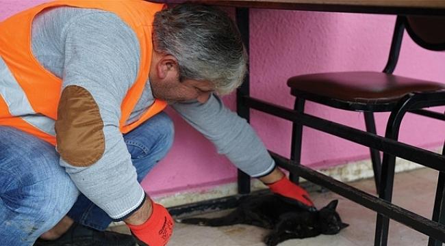 Terme'de Belediyesi hasta kedinin imdadına yetişti
