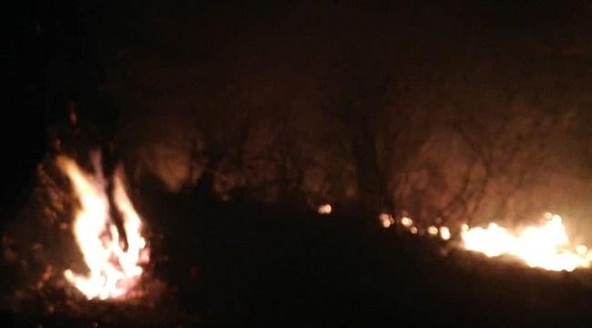 Samsun Haber - Samsun'da orman yangını