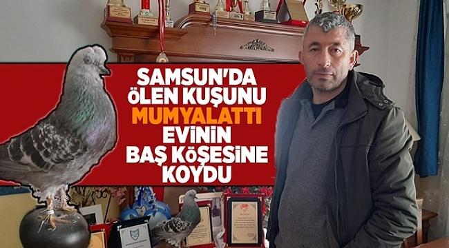 Samsun'da ölen kuşunu mumyalattı evinin baş köşesine koydu