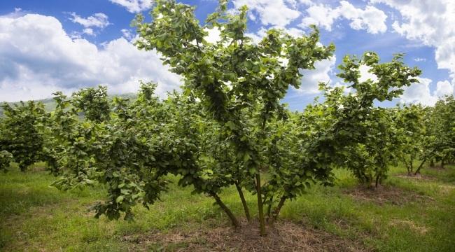 Ferrero Değerli Tarım'dan fındık üreticilerine değerli öneriler