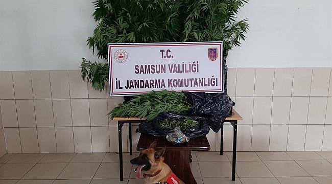 Samsun'da ekipler uyuşturucu tacirlerine göz açtırmadı