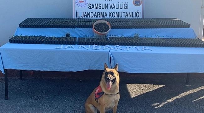 Samsun'da narkotik dedektör köpeği Ozon iş başında