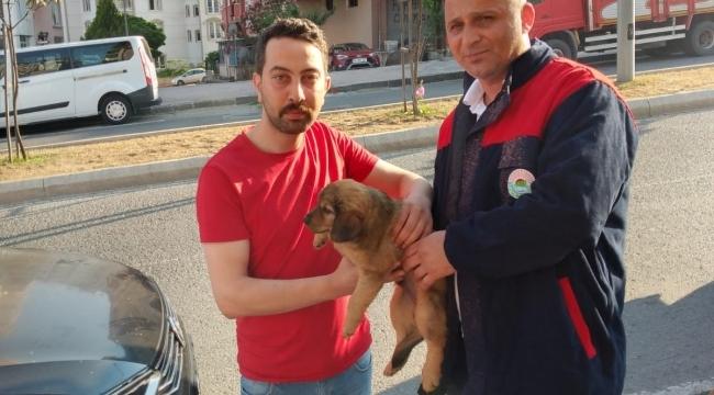 Samsun Haber - İlkadım'da sokağa terk edilen hayvanlar sahipsiz kalmadı