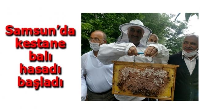 Samsun Haber - Samsun'da kestane balı hasadı başladı