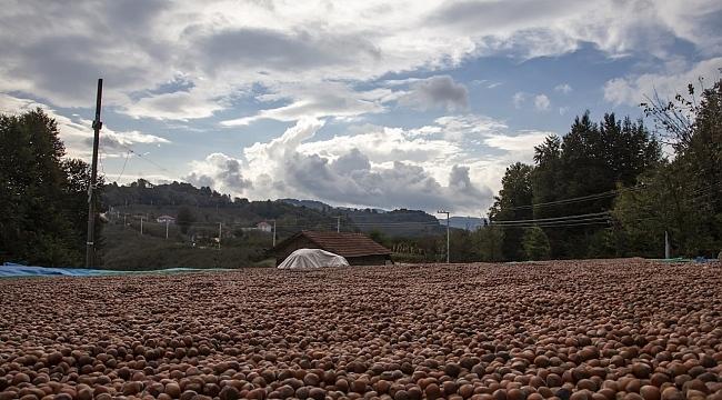 Ferrero Değerli Tarım Ekibi fındık üreticilerini uyardı