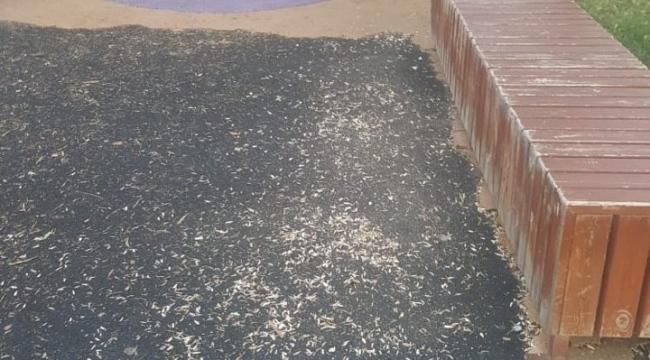 samsun haber - Samsun sahili çekirdek kabuklarıyla kirletiliyor