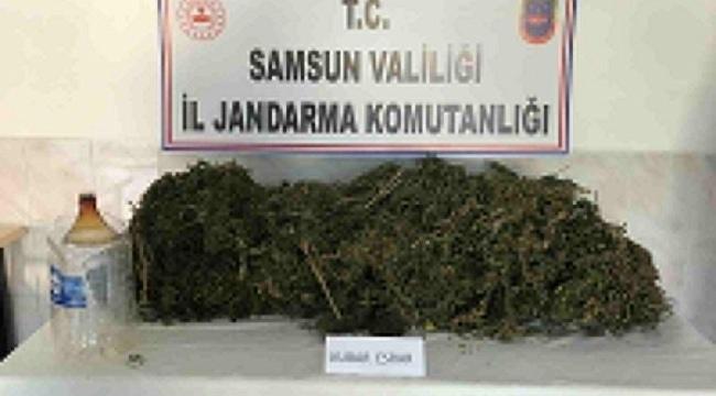 samsun haber - Samsun'da zehir operasyonu