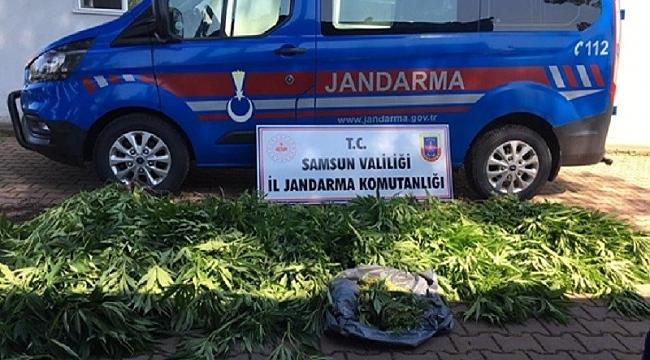 Samsun'da uyuşturucu operasyonu! 15 kişi yakalandı